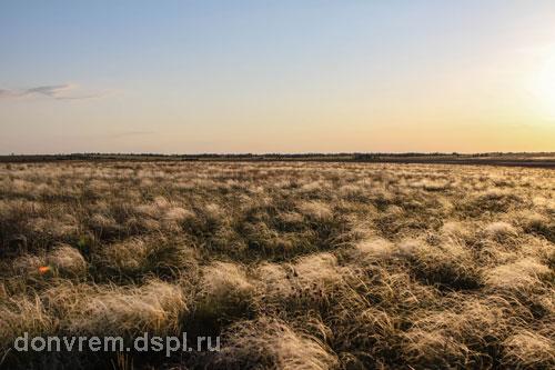 Целинная степь в период цветения ковыля в окрестностях санатория «Маныч» (фото Миноранский В.А.)