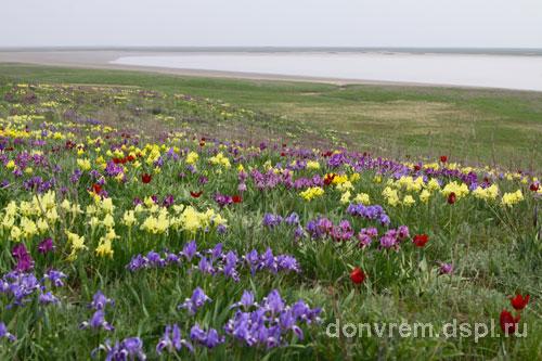 Степь весной и летом картинки