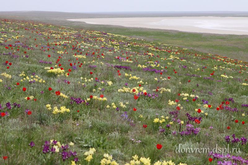Целинная степь весной. Фото С. В. Толчеевой